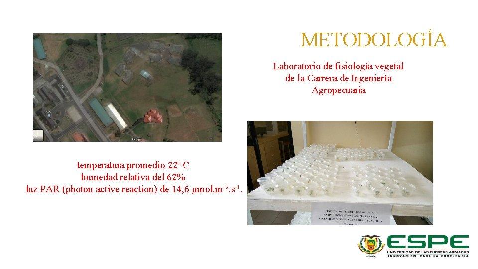 METODOLOGÍA Laboratorio de fisiología vegetal de la Carrera de Ingeniería Agropecuaria temperatura promedio 220