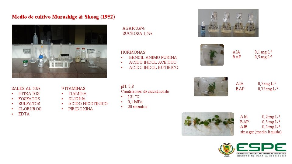 Medio de cultivo Murashige & Skoog (1952) AGAR 0, 6% SUCROSA 1, 5% HORMONAS