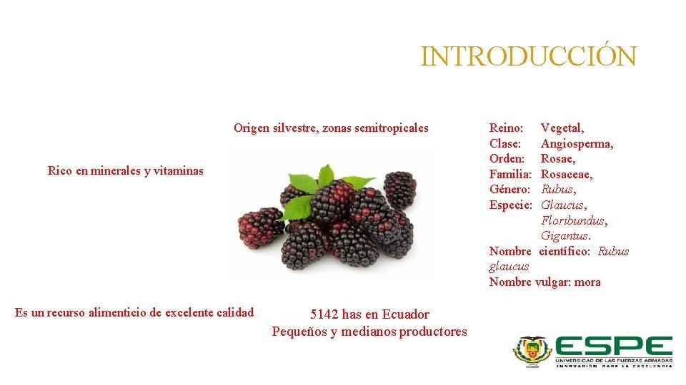 INTRODUCCIÓN Origen silvestre, zonas semitropicales Rico en minerales y vitaminas Es un recurso alimenticio