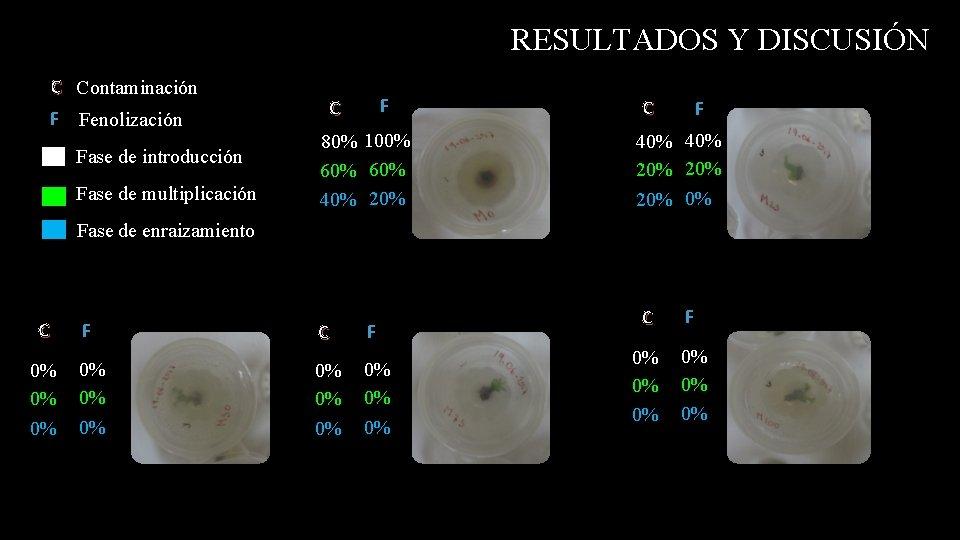 RESULTADOS Y DISCUSIÓN C Contaminación F Fenolización Fase de introducción Fase de multiplicación F