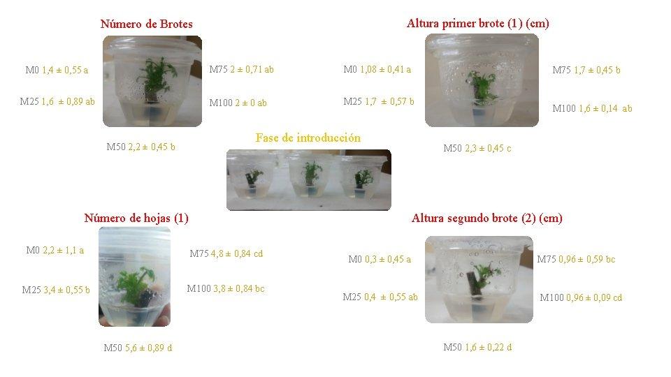Altura primer brote (1) (cm) Número de Brotes M 0 1, 4 ± 0,
