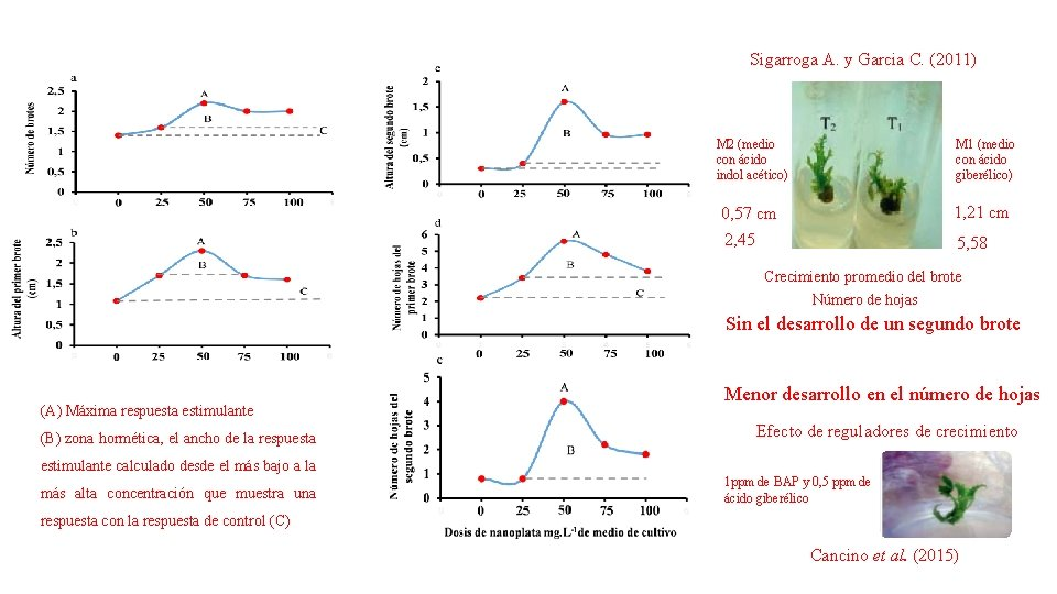 Sigarroga A. y Garcia C. (2011) M 2 (medio con ácido indol acético) M