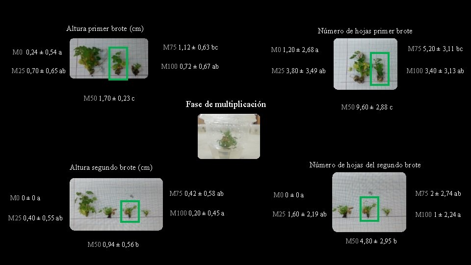 Altura primer brote (cm) Número de hojas primer brote M 75 1, 12 ±