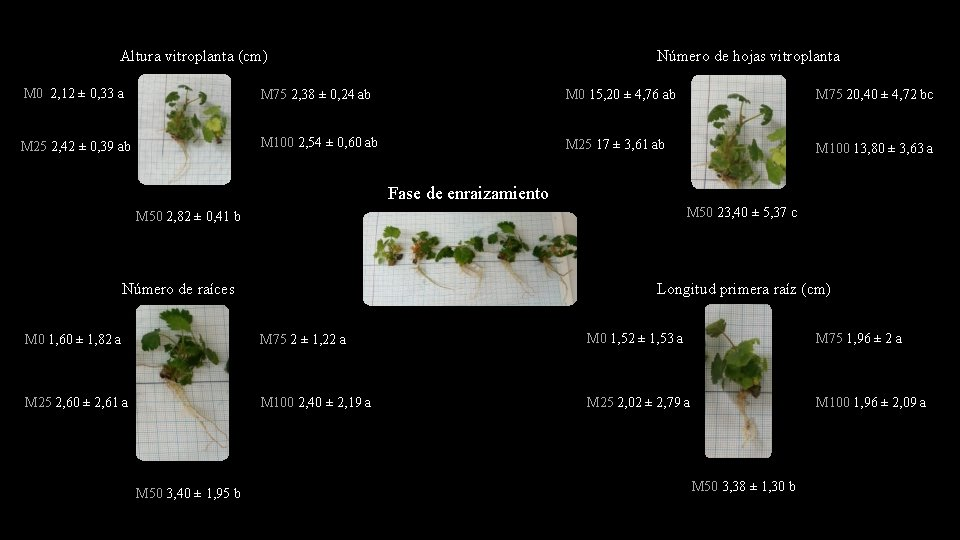 Altura vitroplanta (cm) Número de hojas vitroplanta M 0 2, 12 ± 0, 33