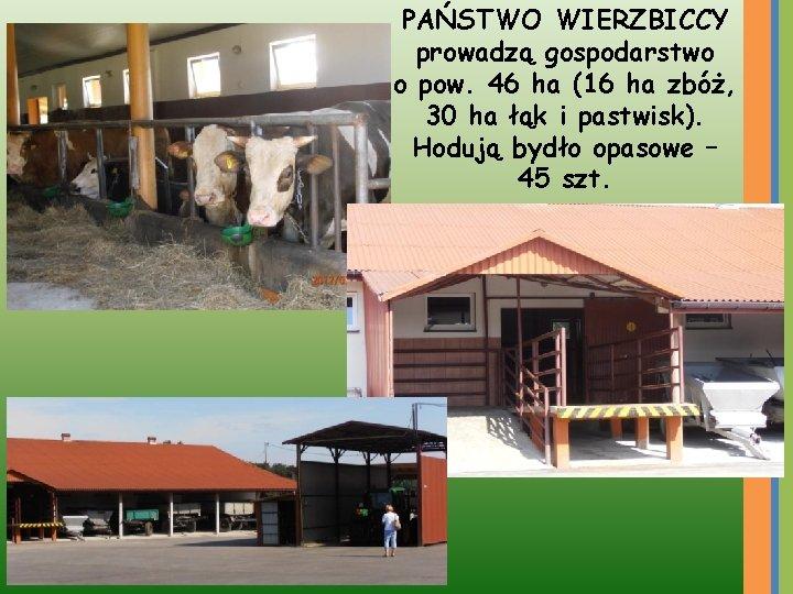 PAŃSTWO WIERZBICCY prowadzą gospodarstwo o pow. 46 ha (16 ha zbóż, 30 ha łąk