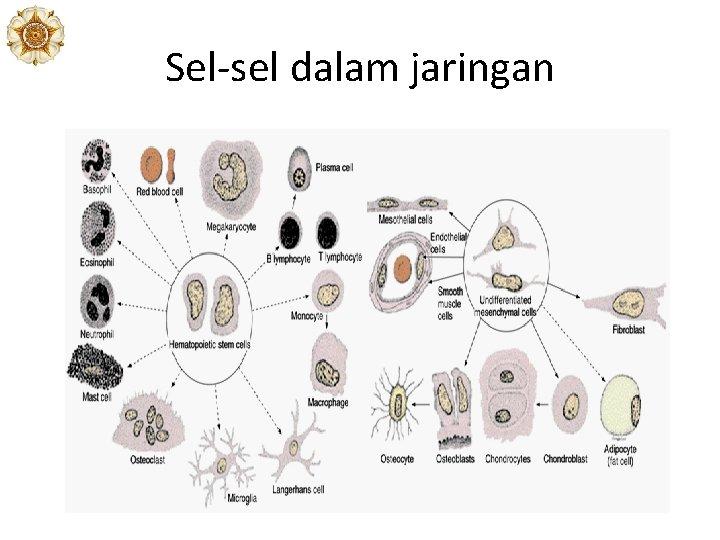 Sel-sel dalam jaringan