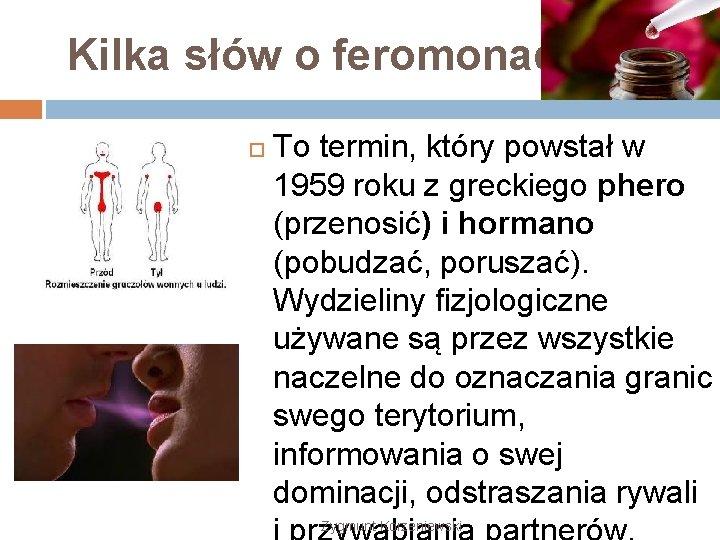 Kilka słów o feromonach To termin, który powstał w 1959 roku z greckiego phero