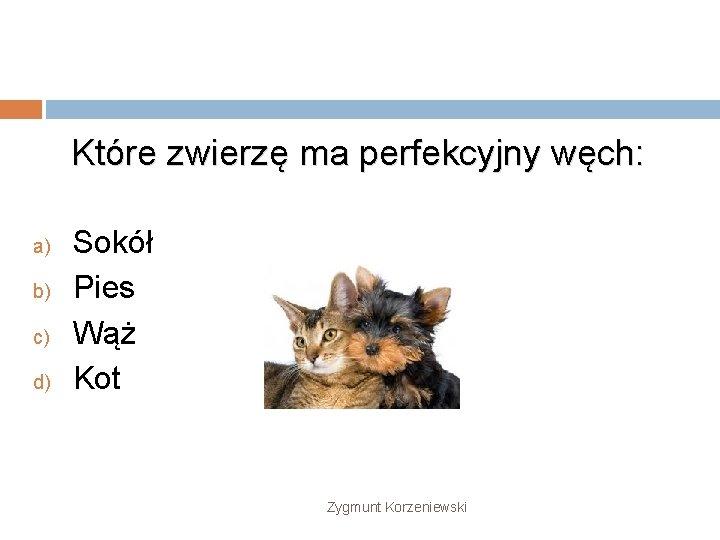 Które zwierzę ma perfekcyjny węch: a) b) c) d) Sokół Pies Wąż Kot Zygmunt