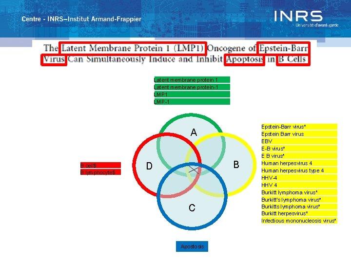 Latent membrane protein 1 Latent membrane protein-1 LMP-1 A B cell$ B lymphocyte$ B