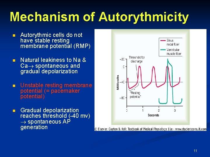 Mechanism of Autorythmicity n Autorythmic cells do not have stable resting membrane potential (RMP)
