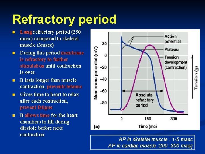 Refractory period n n n Long refractory period (250 msec) compared to skeletal muscle