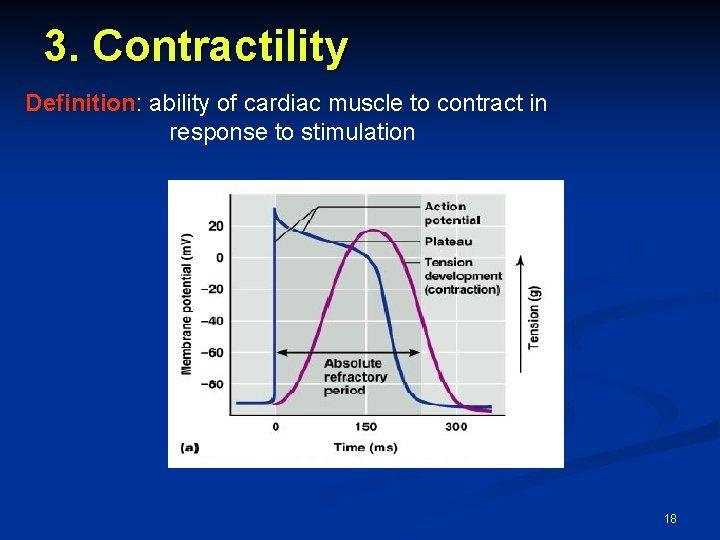 3. Contractility Definition: ability of cardiac muscle to contract in response to stimulation 18