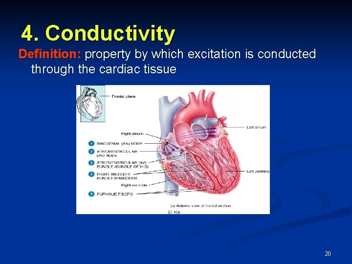 4. Conductivity Definition: property by which excitation is conducted through the cardiac tissue 20