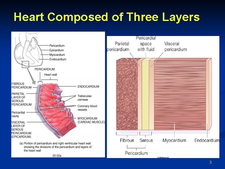 Heart Composed of Three Layers 3