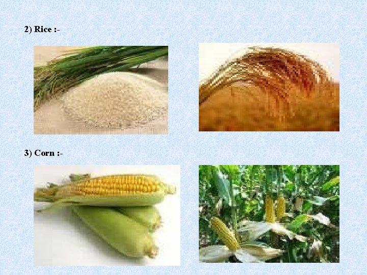 2) Rice : - 3) Corn : -
