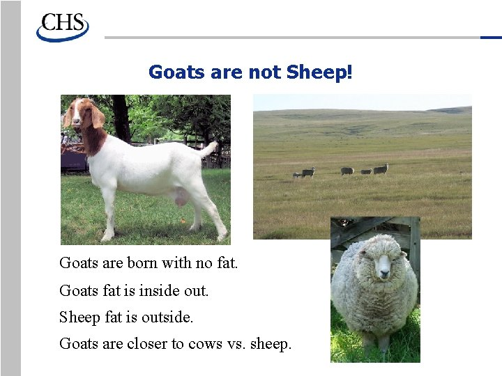 Goats are not Sheep! Goats are born with no fat. Goats fat is inside