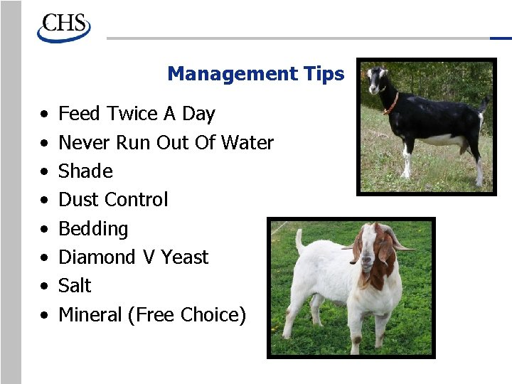 Management Tips • • Feed Twice A Day Never Run Out Of Water Shade