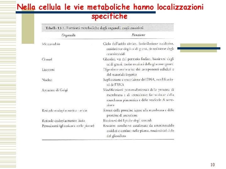 Nella cellula le vie metaboliche hanno localizzazioni specifiche. 10