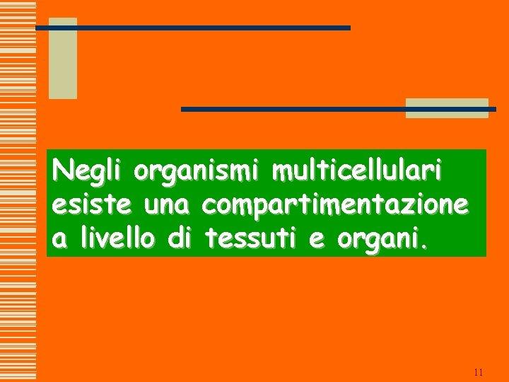 Negli organismi multicellulari esiste una compartimentazione a livello di tessuti e organi. 11