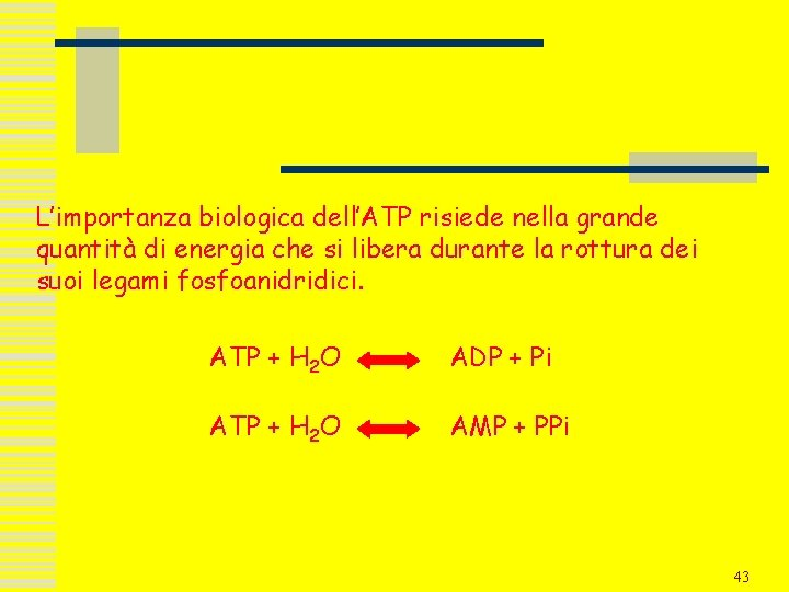 L'importanza biologica dell'ATP risiede nella grande quantità di energia che si libera durante la