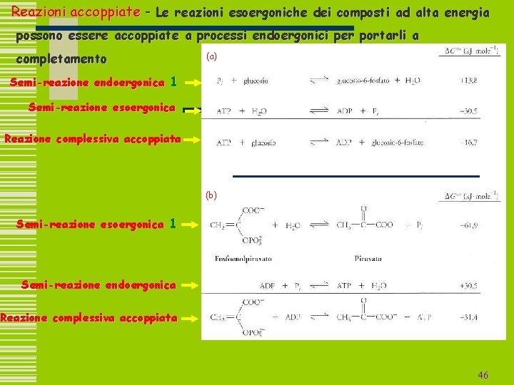Reazioni accoppiate - Le reazioni esoergoniche dei composti ad alta energia possono essere accoppiate