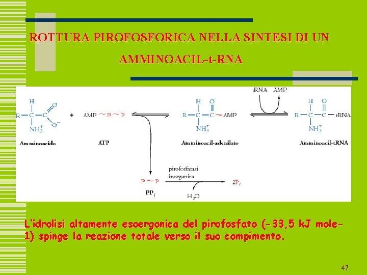 ROTTURA PIROFOSFORICA NELLA SINTESI DI UN AMMINOACIL-t-RNA L'idrolisi altamente esoergonica del pirofosfato (-33, 5