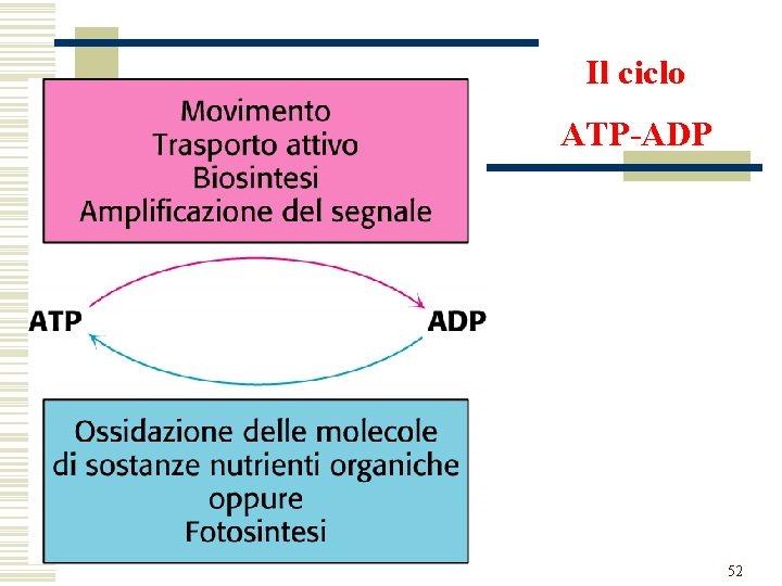 Il ciclo ATP-ADP 52