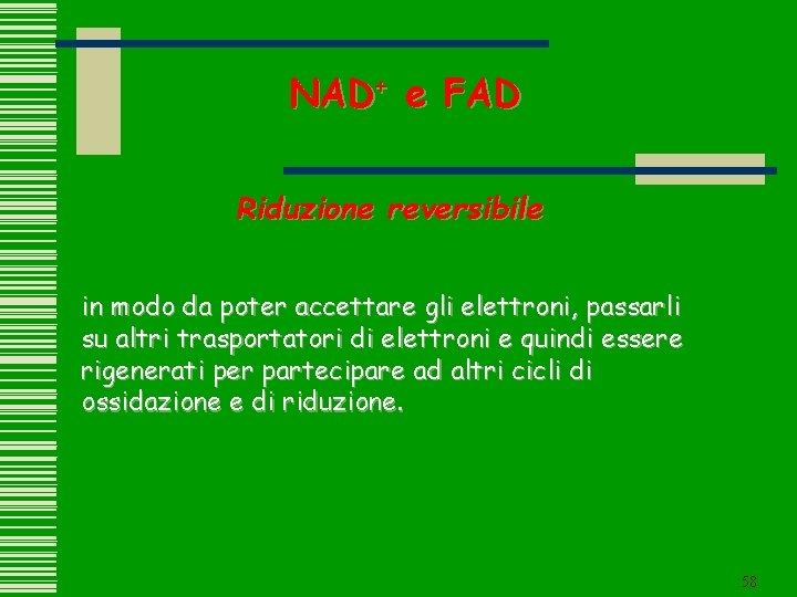 NAD+ e FAD Riduzione reversibile in modo da poter accettare gli elettroni, passarli su