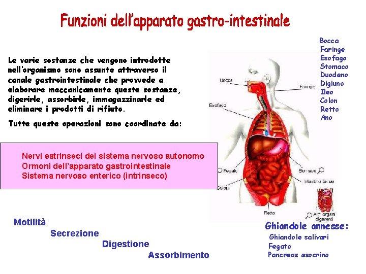 Le varie sostanze che vengono introdotte nell'organismo sono assunte attraverso il canale gastrointestinale che