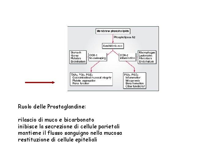 Ruolo delle Prostaglandine: rilascio di muco e bicarbonato inibisce la secrezione di cellule parietali
