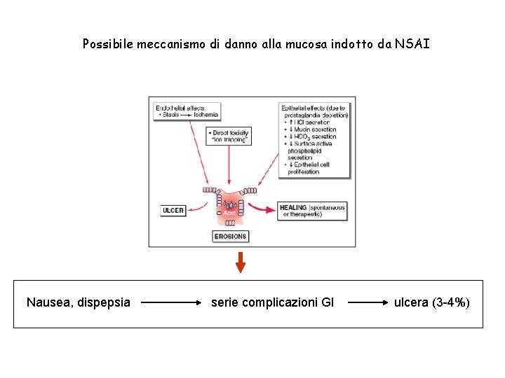 Possibile meccanismo di danno alla mucosa indotto da NSAI Nausea, dispepsia serie complicazioni GI
