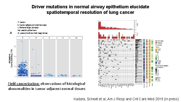 Driver mutations in normal airway epithelium elucidate spatiotemporal resolution of lung cancer T: tumor