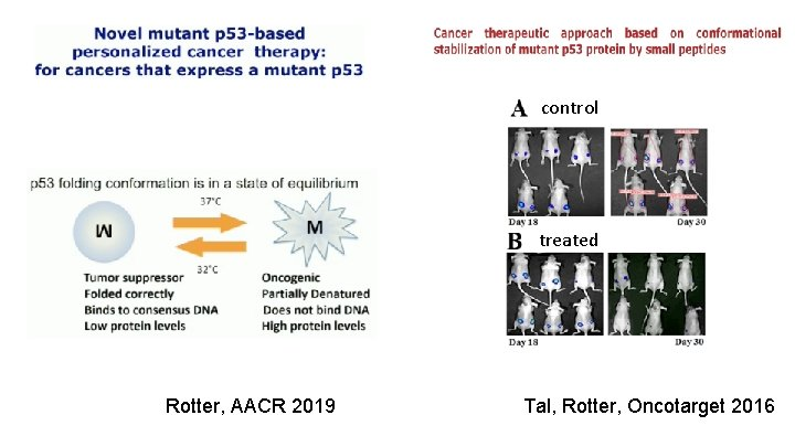 control treated Rotter, AACR 2019 Tal, Rotter, Oncotarget 2016