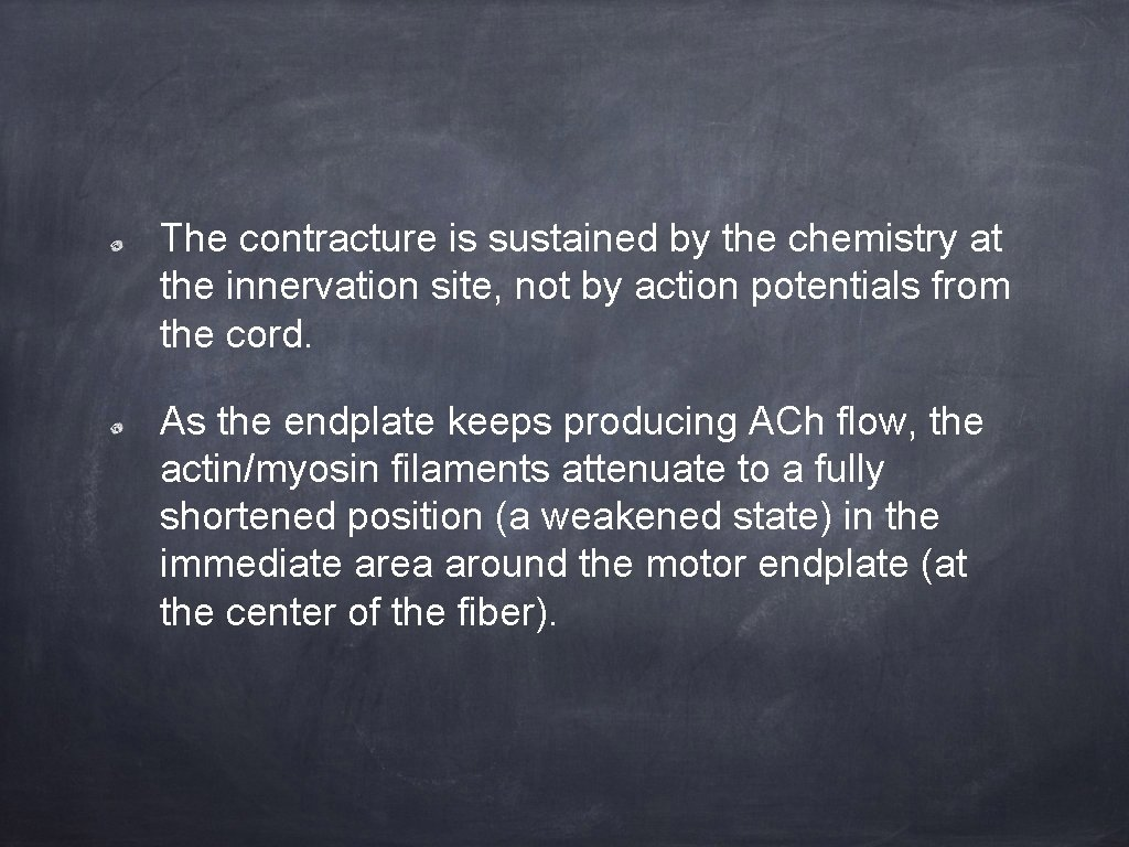 The contracture is sustained by the chemistry at the innervation site, not by action