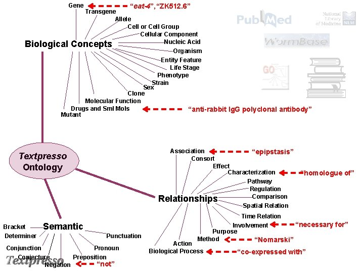 "Gene Biological ""eat-4"", ""ZK 512. 6"" Transgene Allele Cell or Cell Group Cellular Component"