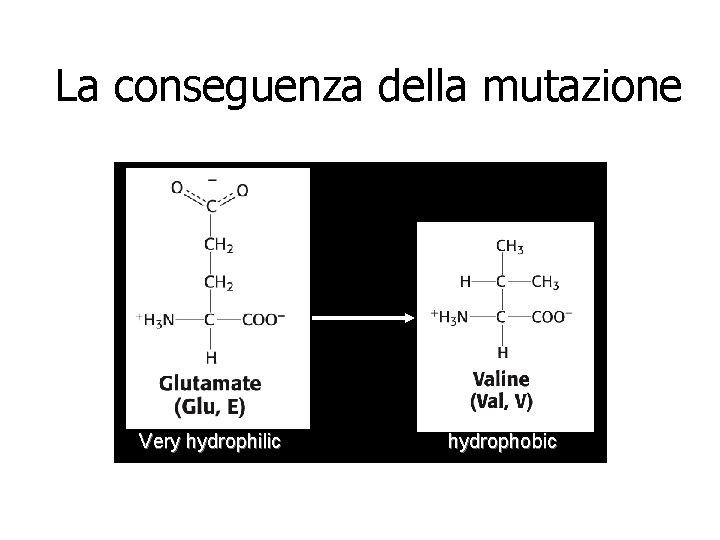 La conseguenza della mutazione Very hydrophilic hydrophobic