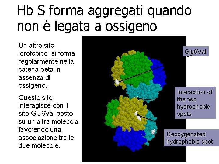 Hb S forma aggregati quando non è legata a ossigeno Un altro sito idrofobico