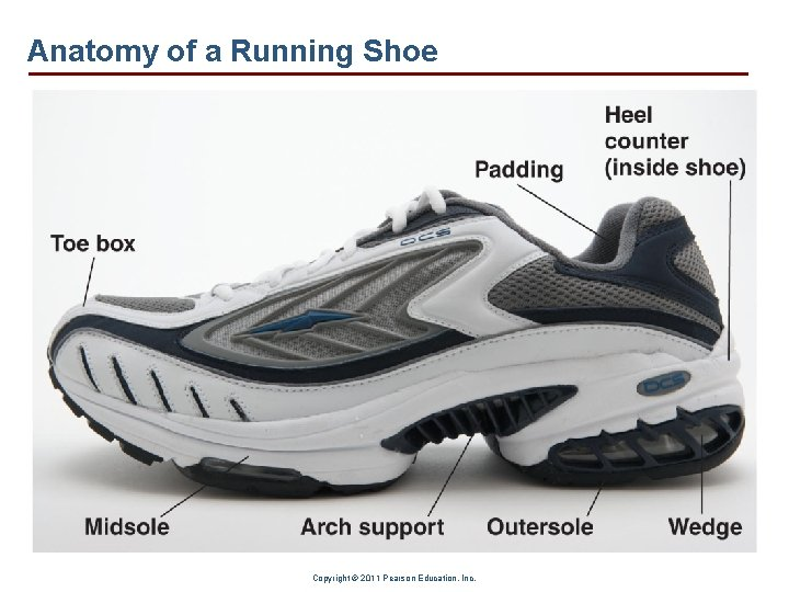 Anatomy of a Running Shoe Copyright © 2011 Pearson Education, Inc.