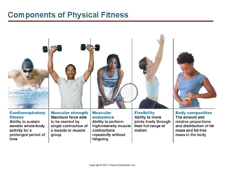 Components of Physical Fitness Copyright © 2011 Pearson Education, Inc.