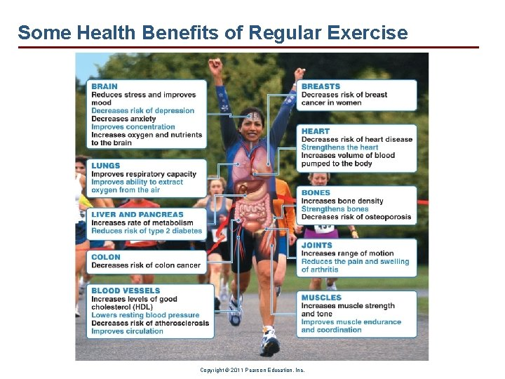Some Health Benefits of Regular Exercise Copyright © 2011 Pearson Education, Inc.