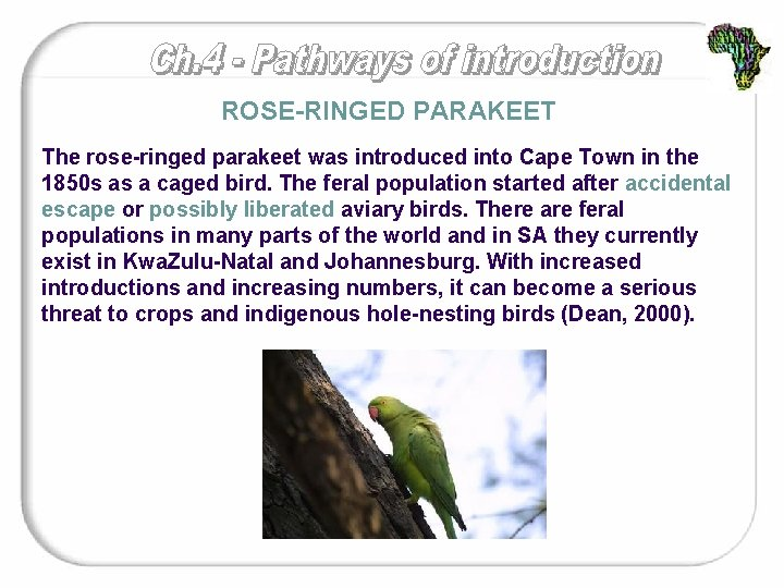ROSE-RINGED PARAKEET The rose-ringed parakeet was introduced into Cape Town in the 1850 s