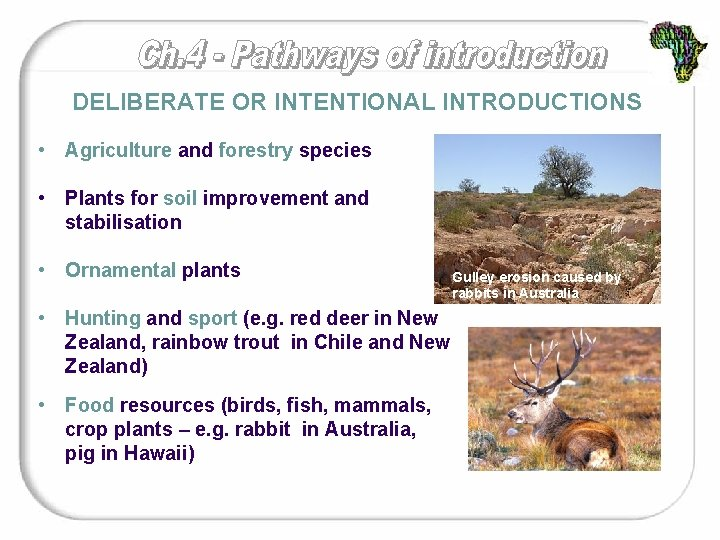 DELIBERATE OR INTENTIONAL INTRODUCTIONS • Agriculture and forestry species • Plants for soil improvement