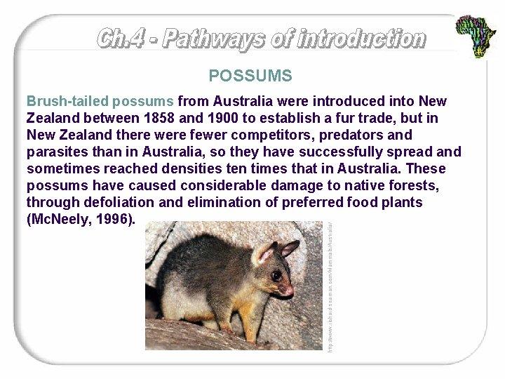 POSSUMS http: //www. richard-seaman. com/Mammals/Australia/ Brush-tailed possums from Australia were introduced into New Zealand