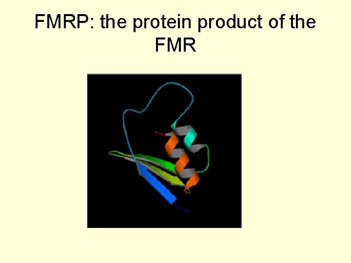 FMRP: the protein product of the FMR