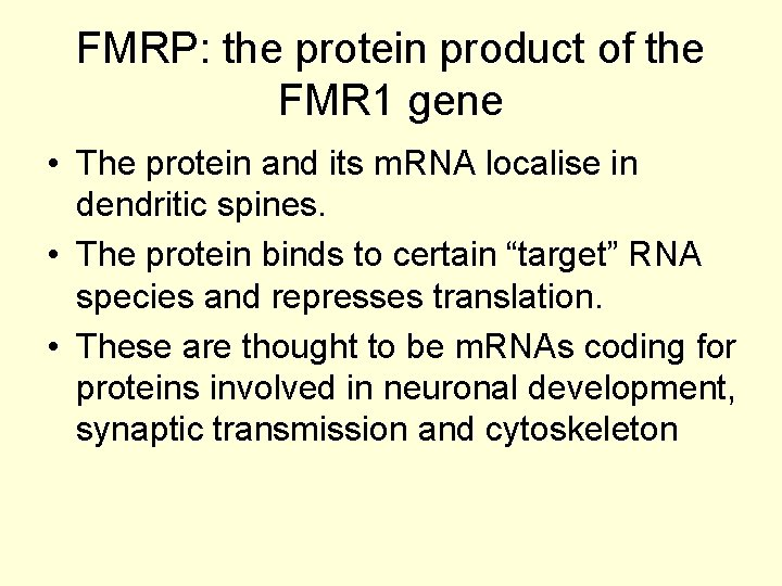 FMRP: the protein product of the FMR 1 gene • The protein and its