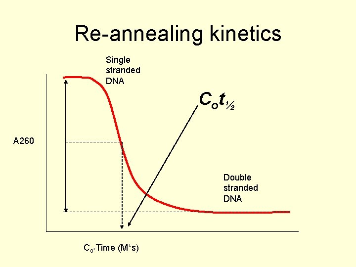 Re-annealing kinetics Single stranded DNA C o t½ A 260 Double stranded DNA Co*Time