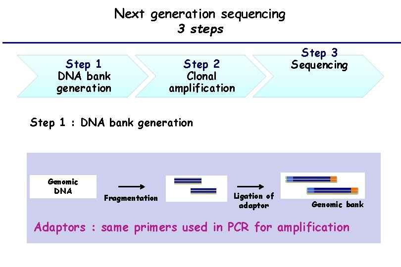 Next generation sequencing 3 steps Step 1 DNA bank generation Step 2 Clonal amplification