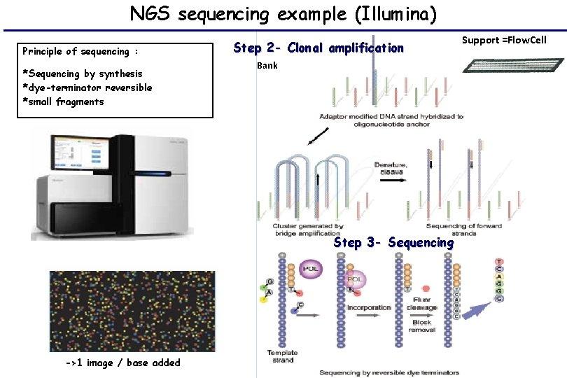 NGS sequencing example (Illumina) Principle of sequencing : *Sequencing by synthesis *dye-terminator reversible *small