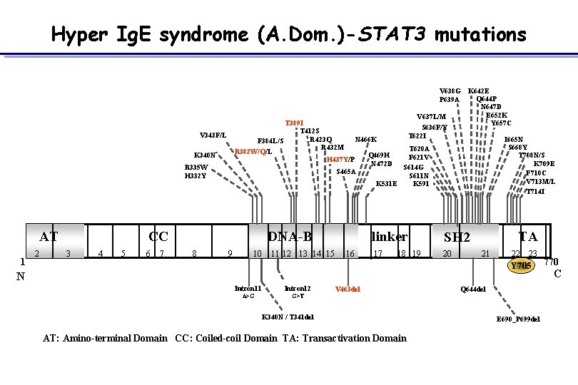 Hyper Ig. E syndrome (A. Dom. )-STAT 3 mutations T 389 I T 412