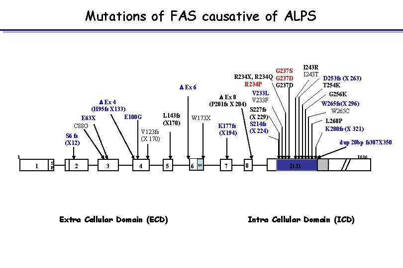 Mutations of FAS causative of ALPS G 237 S R 234 X, R 234